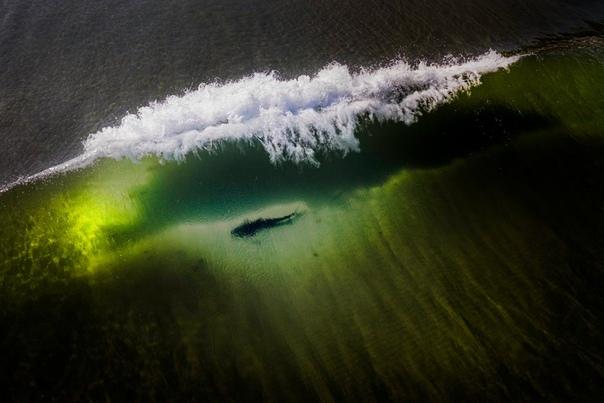 Леопардовая акула, плывующая в волнах океана (Ла-Холья, Калифорния)