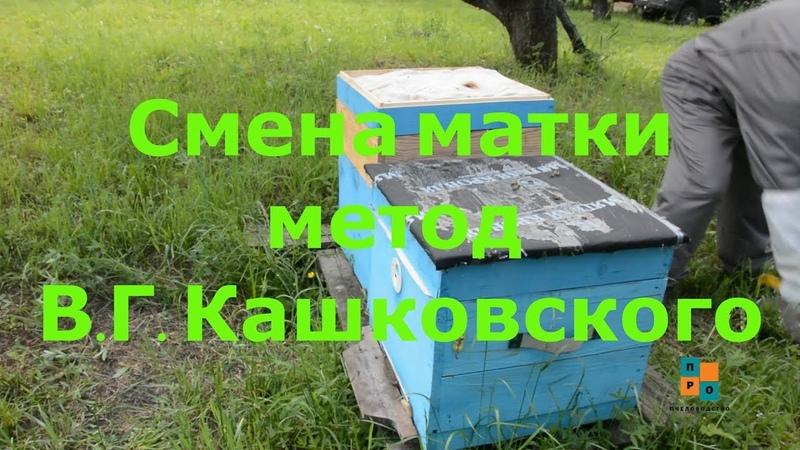 Слабая семья спасать или вытряхнуть Смена матки метод Кашковского В Г