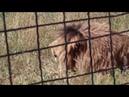Олежка сегодня (15.06.2019). Привет ему от Радимы Тайсумовой. Парк львов Тайган. Белогорск Крым.