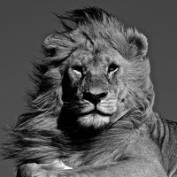 Лев Царев