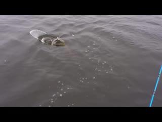 Жесткий облом на рыбалке) ;tcnrbq j,kjv yf hs,fkrt)