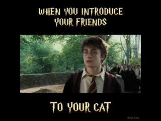 Монтажёр из США Тибо Шарропин помещает свою кошку в популярные фильмы