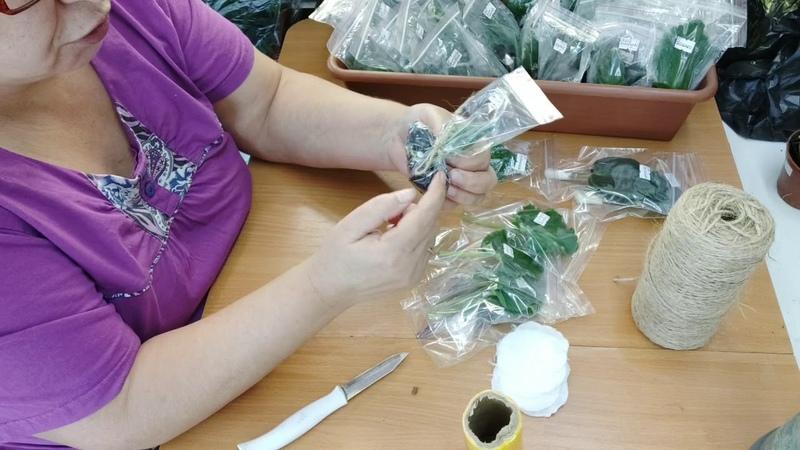 Гениально простая упаковка укорененных листиков