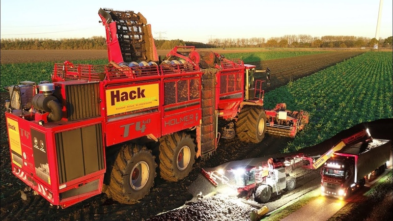 Chicory Root Harvest - Start to Finish | 12 row Holmer T4-40 Terra Felis 2 | Loonbedrijf Hack