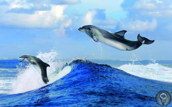 Ужасающие факты о дельфинах, живущих в неволе