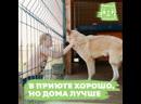 Приют для собак «Тимвилль»