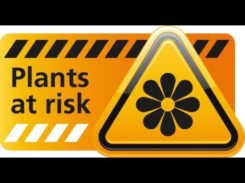 EXCLUSIF Les plantes s'éteignent à un rythme jamais vu auparavant