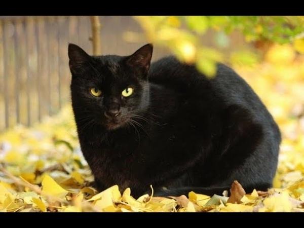 После похорон дочери, ко мне пришла чёрная кошка... точь-в-точь ...