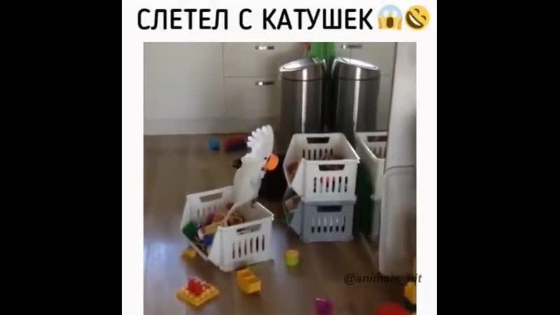 попуг
