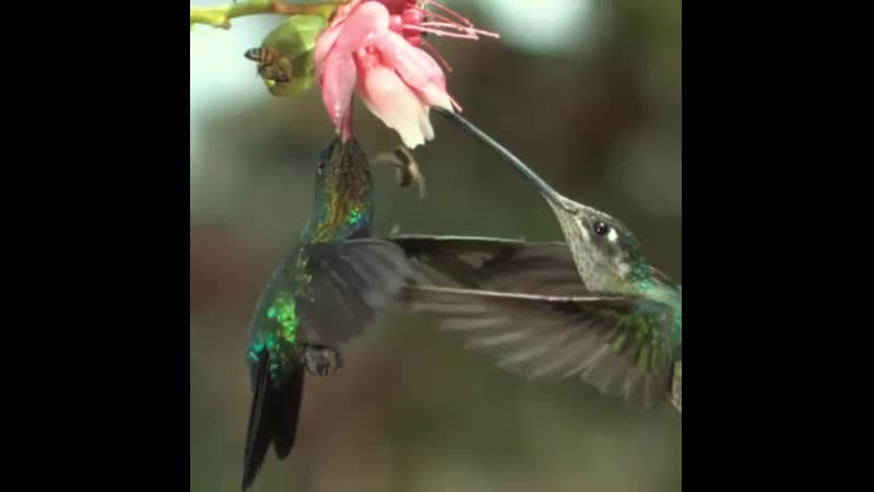 Hummingbird accidentally slaps the hell out of a bee with its wing.