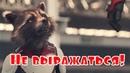 Мстители Финал - Не выражаться! и Пора оправдать два новых ТВ спота