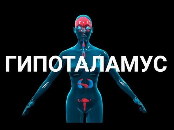 Гипоталамус Гипотоламо гипофизная система