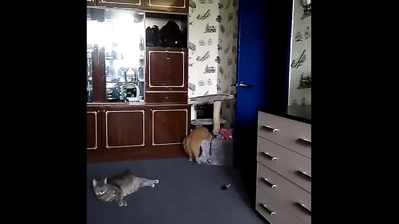 когда твой кот не очень умный 🤣