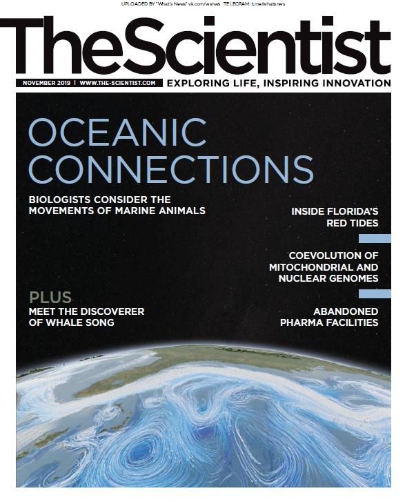 The Scientist - November 2019