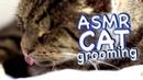 ASMR Cat Grooming 32