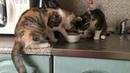 """Алеся on Instagram """"Эпичная борьба котят за миску с едой. На самом деле видео было снято ещё 7 февраля, но как обычно выкладываю сюда гораздо позж..."""