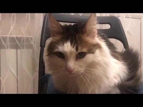 1978). 17.09.2016 - Котик Лаврентий (теперь CHITOS) живет дома (видео из дома)