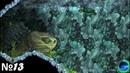 Aquaria - 13 - Прыгаем по пузырям