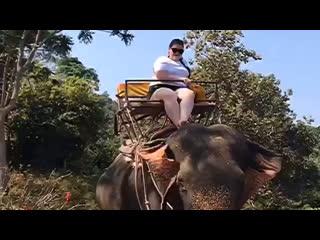 Тайланд 2019: Большой Будда, слоны 🐘 и мега-крутой трек 🦁