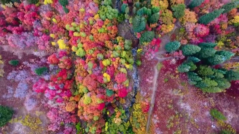 Осенние пейзажи в долине Огден