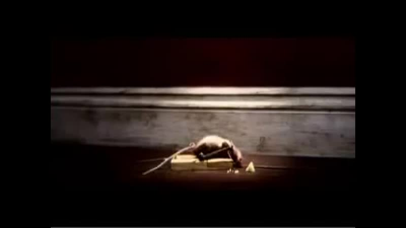 Video de risa (Rata Rocky).mp4