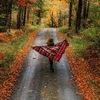 Вдохновение • Inspiration • Осень