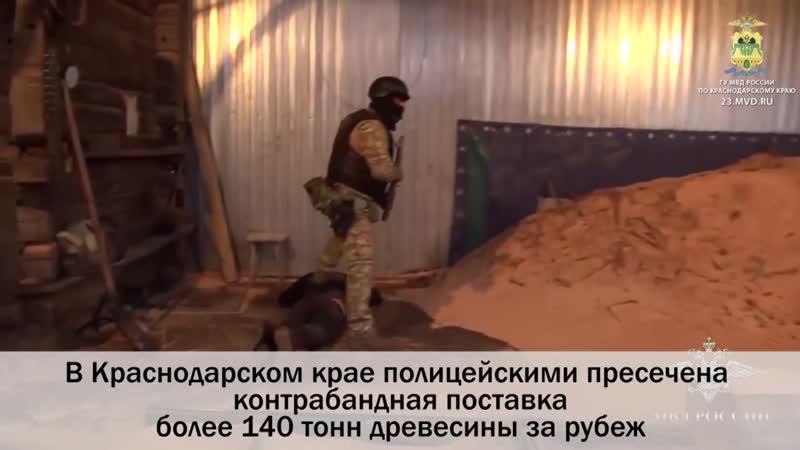 В Краснодарском крае возбуждено уголовное дело о контрабанде более 140 тонн древесины за рубеж
