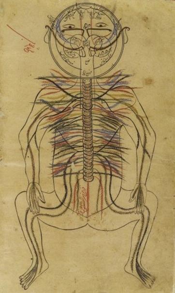 Нервная система от Авиценны