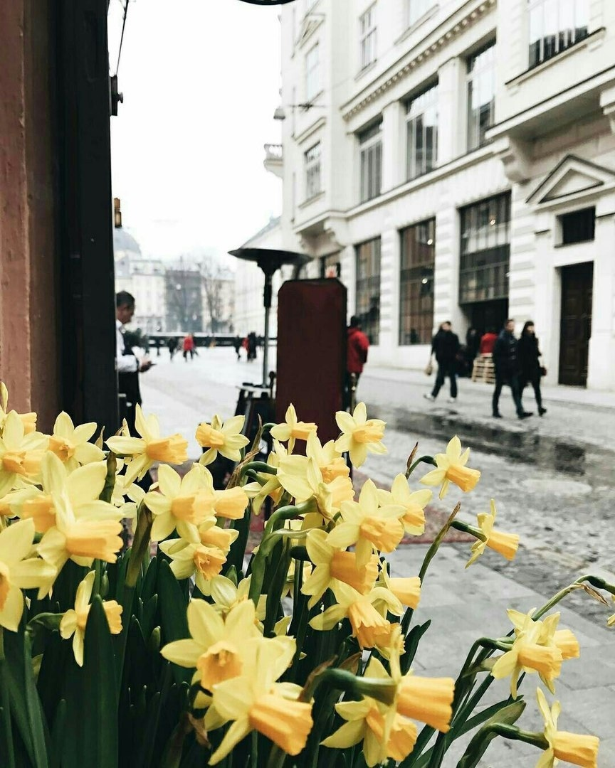 Улицами Львова.