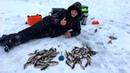 ЧТО С НАШИМ ПРУДОМ Окуня ТОПЯТ и утягивают удочки Рыбалка на живца
