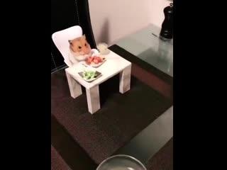 lil hamster