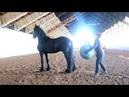 Как пристать к лошади