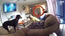 5 Собак Которые Смогли Увидеть Нечто Необъяснимое