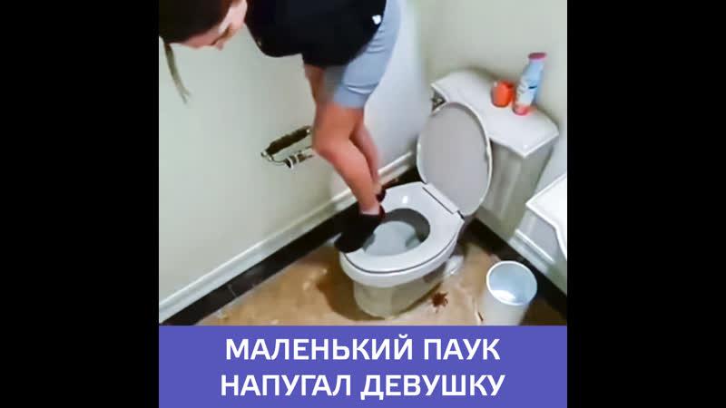 К девушке в туалет заполз паук — Москва 24