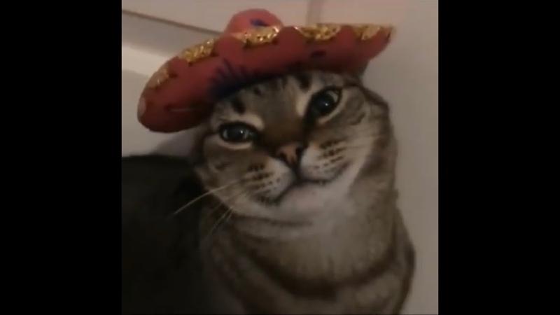 You make me un Poco Loco meme