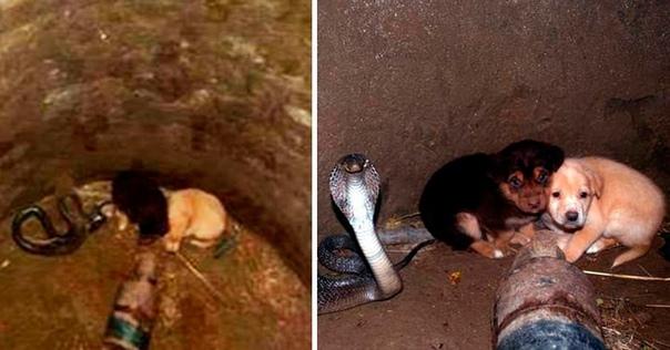 Даже самые смертоносные и опасные существа на земле знают, что такое сосуществование и взаимовыручка