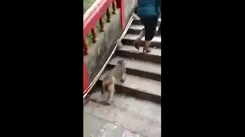 гоп стоп и обезьянка