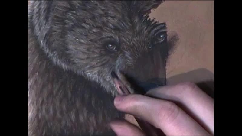медведь (пастель)