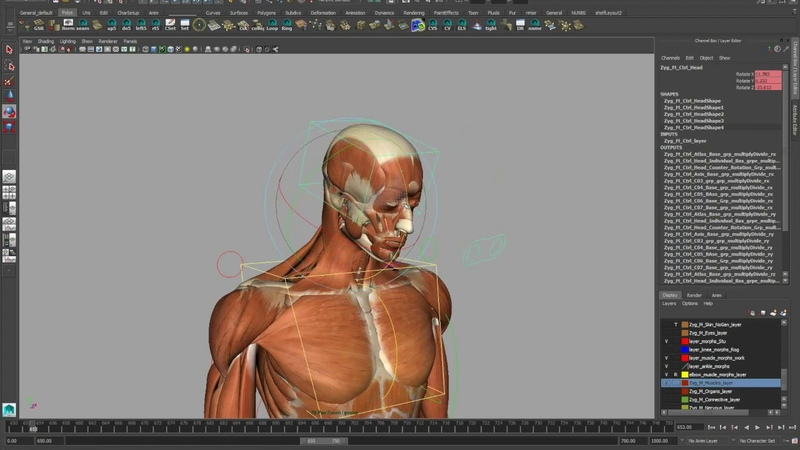 Complete Rigged 3D Model [hands, feet, muscles, skeleton, skin, internal anatomy]