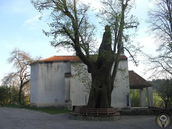 Удивительный Предъямский замок обитель словенского «Робин Гуда» В десятке километров от города Постойна в Словении расположен Предъямский замок, который в полном соответствии со своим названием