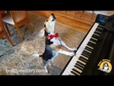 NEW SONG! 🥓BACON🥓 by BUDDY MERCURY THE AMAZING PIANO DOG!