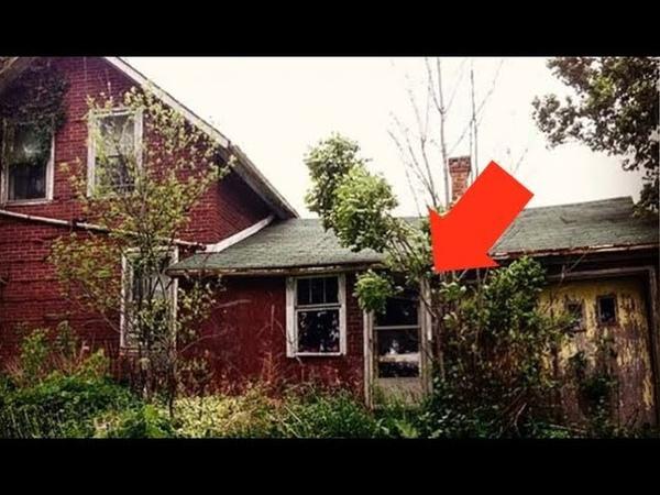 გოგომ იპოვა მიტოვებული სახლი ტყეში, როცა კ43