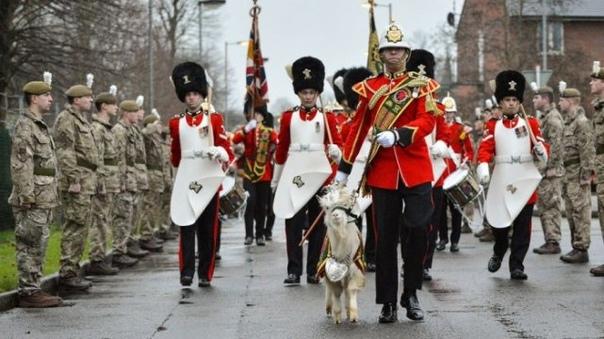 АВТОРИТЕТНЫЕ КОЗЛЫ В далеком 1775 году, во время войны за независимость США, на поле боя под Бостоном забрел дикий козлик. И, как гласит старинная легенда, повел англичан за собой вплоть до