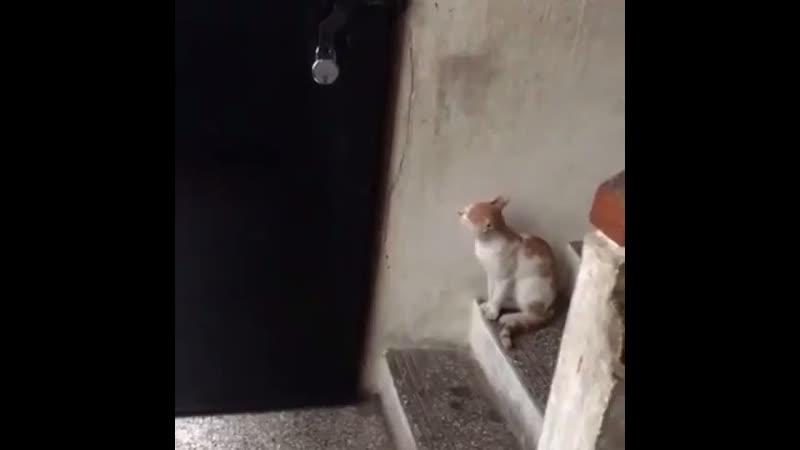 кот звонит к хозяену