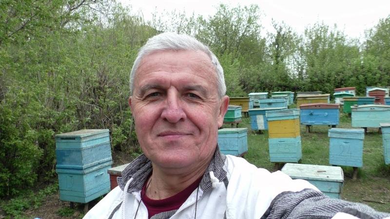 Что делать если пчелы заложили маточник Как остановить роение и упорядочить гнездо