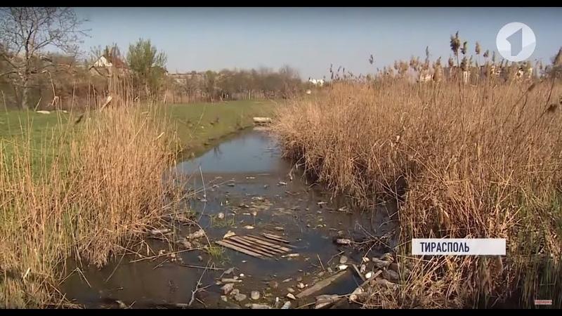 Экологи спасают ручей Светлый