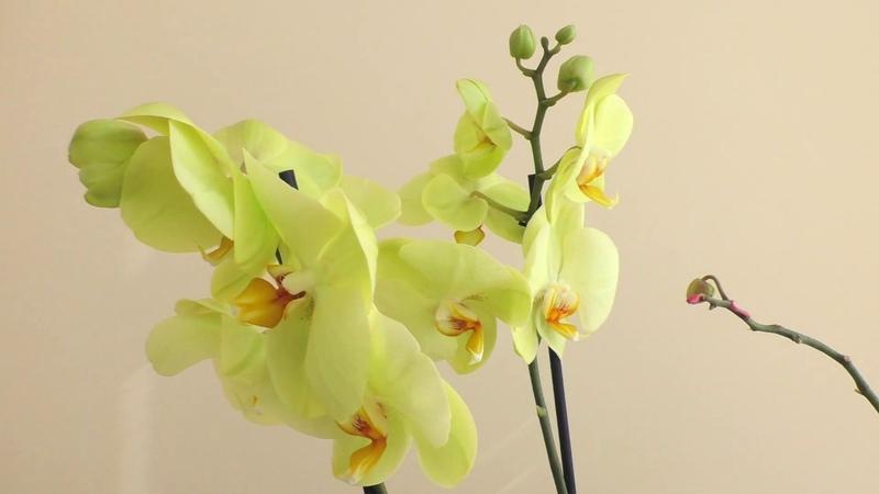 Новые орхидеи и новые непрошенные гости