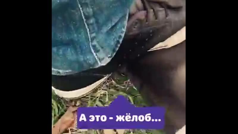 Водосточка «Альта-Профиль» - испытание ногами.