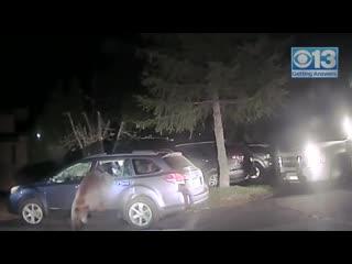 Deputy frees bear from car near lake tahoe