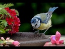 Mozart en armonía con la naturaleza: música perfecta para el alma